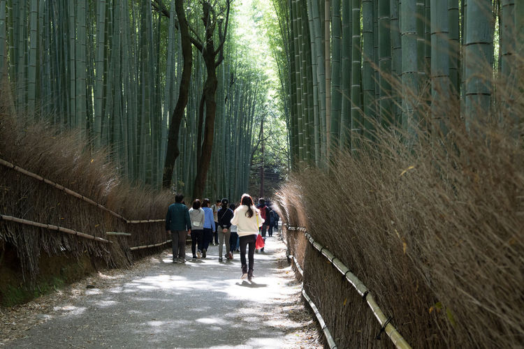Rear view of people walking on footpath amidst bamboo forest