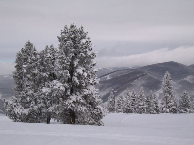 Cloudy Day Vail Colorado Beauty In Nature Cold Temperature Colorado River Day Frosted Trees Landscape Mountain Nature No Color Monocromo No People Outdoors Pine Tree Scenics Sky Snow Tranquil Scene Tranquility Tree Vail Lake Weather White Color Winter