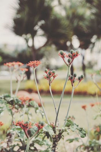 EyeEm Selects Growth Nature Plant Flower Beauty In Nature Day