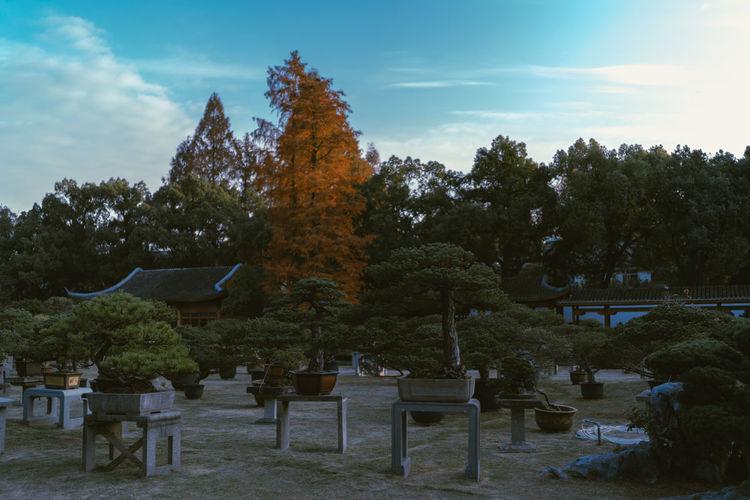 Trees growing in cemetery against sky