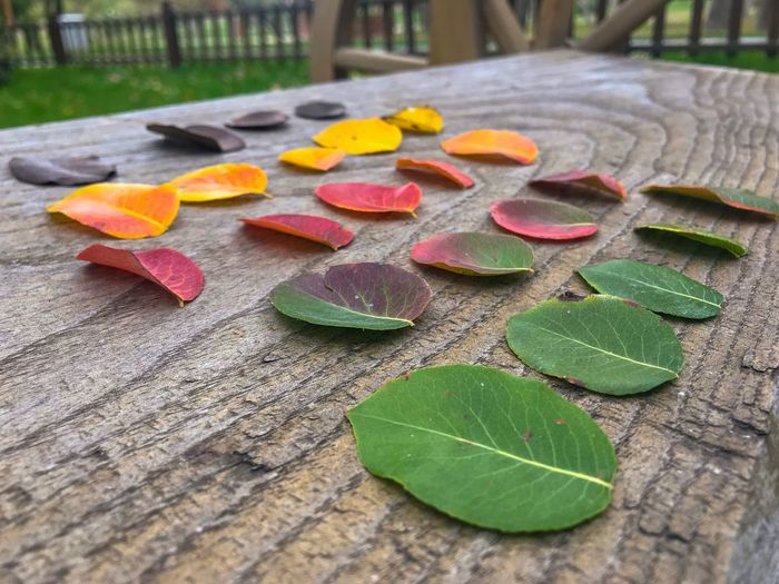 Autumn Colorful Leaves In Autumn Colorful Leaves Autumn Leaf Leaf Plant Part Close-up Leaves No People Nature Day Wood - Material Focus On Foreground High Angle View Beauty In Nature Falling Footpath Outdoors Plant Autumn Heart Shape Green Color Table Still Life