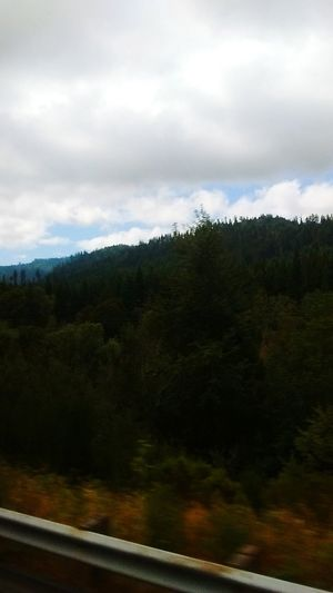 Window view, Bus to San Francisco..... The big woods is my home...... I live in the desert. I live in the mountains, man. Taking Photos Magic... Loving Life! ! ! MY EYES EXPECT TO. WIN!!! Hidden Gems  THESE Are My Friends