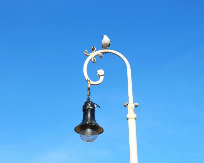 Low Angle View Of Seagull On Street Light Against Clear Blue Sky