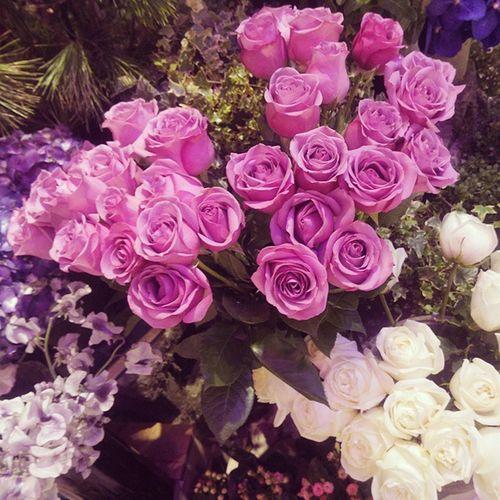 經過時被玫瑰花香吸引,紫色玫瑰好美AgnèsbFleuriste Agnesb Rosé Flowers Love
