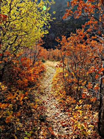 Full Frame Outdoors High Angle View Backgrounds Autumn Nature Beauty In Nature Falling Leaves Orange Color Path Trail Hikingadventures Fall Leaves Fall Time Beautiful Nature Thewayforward