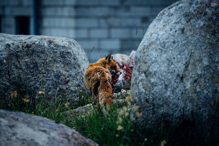 View of dog on rock against wall