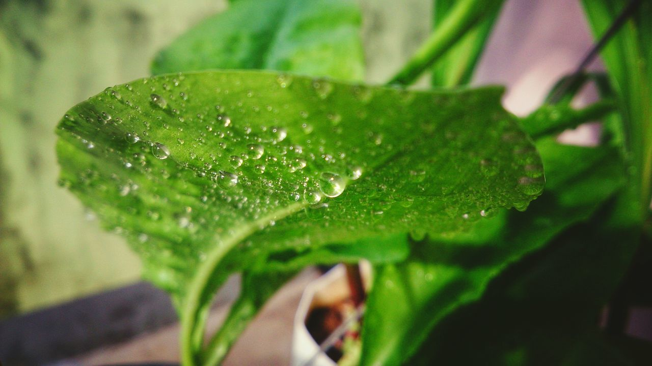 green color, leaf, drop, close-up, nature, growth, selective focus, focus on foreground, no people, water, day, plant, freshness, outdoors, beauty in nature