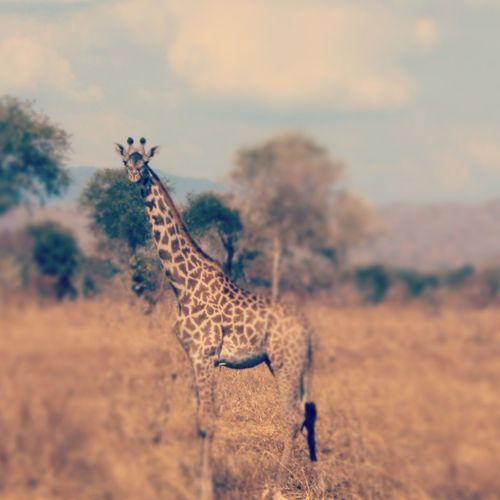 mikumi national park, tanzania! feels like a dream