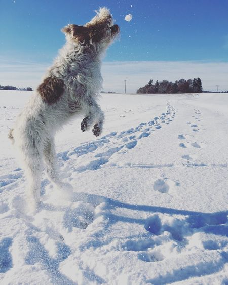 Dog On Snow Against Sky