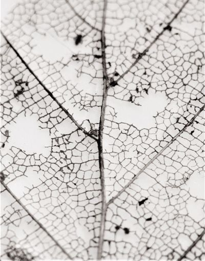 Map or rotten leaf? Naturelovers Close-up Macro Nature Nature Photography Contrast B & W  Kompost Garden Structure Leaf Vein Leaf Map No People High Angle View Direction Nature Close-up Backgrounds Outdoors Full Frame Cracked Textured