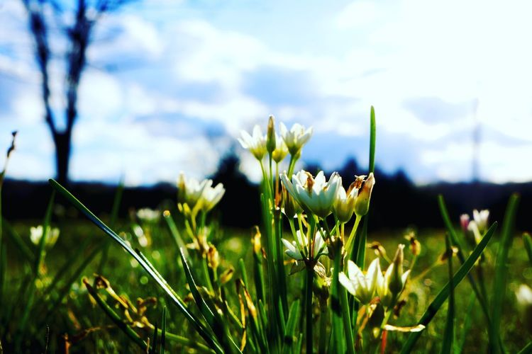 The flowers are starting to bloom!! Grassy Photography Countryside Photographer Tadaa Community Nature_collection Nature Beautiful Naturelovers Nature Photography Beautiful Nature April Showcase Moretocome Bluesky Flowers Blue Sky