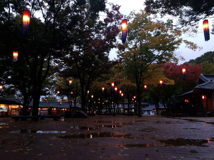 민속촌 등 Oriental Night Tree City Flag Illuminated Patriotism Sky Calm Waterfront