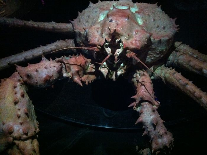 Close-up of crab in aquarium