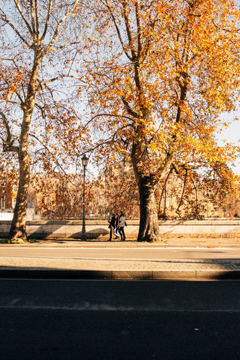 Man walking on road by autumn trees in city