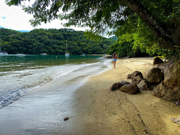 People on beach by trees