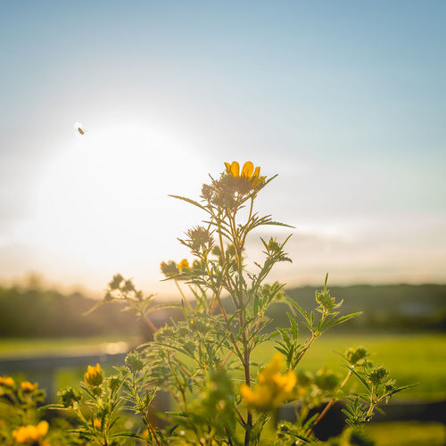 Nikond610 Summertime Golden Hour