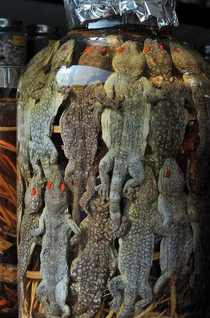 Geckos Food Pickled ASIA