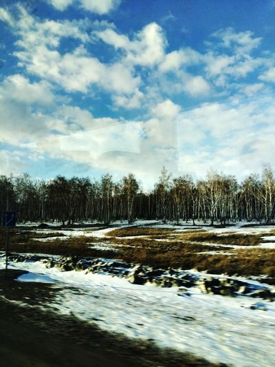 Omsk Region Tree Sky Cold Temperature Snow Beauty In Nature Winter