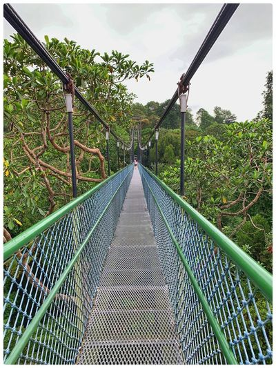 Footbridge over trees against sky