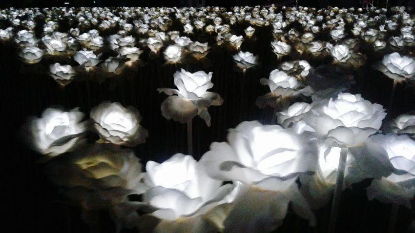 Ten thousand roses 🌹