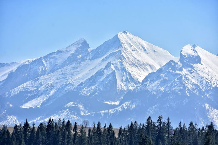 snowcapped mountains in in Slovakia Snow Spring Snowcapped Tree Mountain Snow Forest Winter Pine Tree Pinaceae Cold Temperature Snowcapped Mountain Sky Pine Woodland Fir Tree Pine Wood Mountain Peak Evergreen Tree Wilderness Area Countryside Tree Area WoodLand Mountain Ridge
