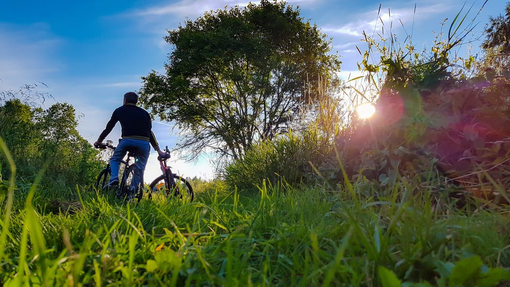 Tree Grass Outdoors Bicycle Sunlight Adventure Sky Low Angle View Men Sport Adult Day Nature People Adults Only Full Length Only Men