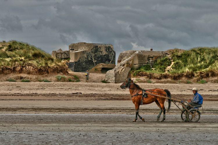Man on horse cart at beach against cloudy sky