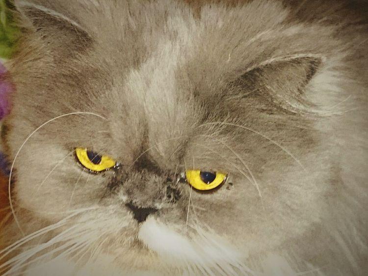 Gata Gatas Gatos Felino Felinos Cats Cat Curiosity Gatos 😍 Gata ♡ GataLinda Animals Animal_collection Animal Photography Animallovers Animal Love Beautiful Animals