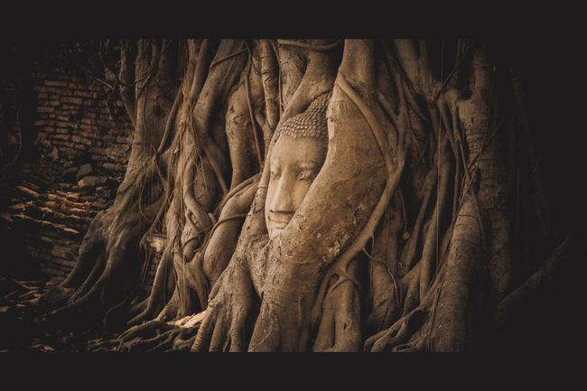 Temple in Thailand. Temple Tourist Summer ☀ Buddha Image Buddha Taking Photos Watmahathat