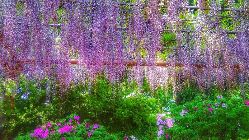 EyeEm Gallery Photo Of The Day Eye4photography  Beauty In Nature Landscapephotography Violet Wisteria Sky Purple Eyeemphotography EyeEm Best Shots Park Gradationcolor April CaptureTheMoment Taking Photos Beauty In Nature EyeEm Flower Colors Enjoying The Moment Healing Powers Of Nature