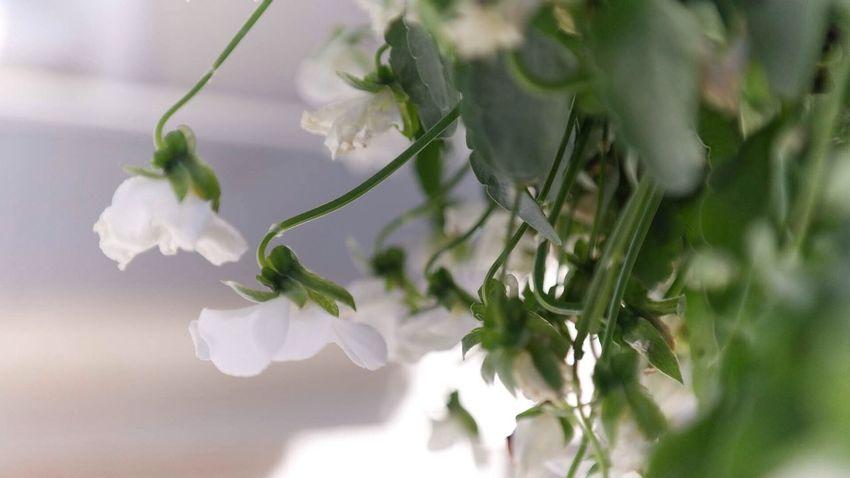 Flower Nature EyeEm Nature Lover Enjoying Life