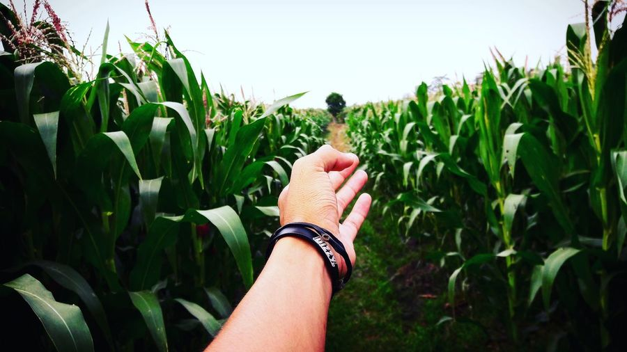 Cropped Hand Amidst Plants On Agricultural Field