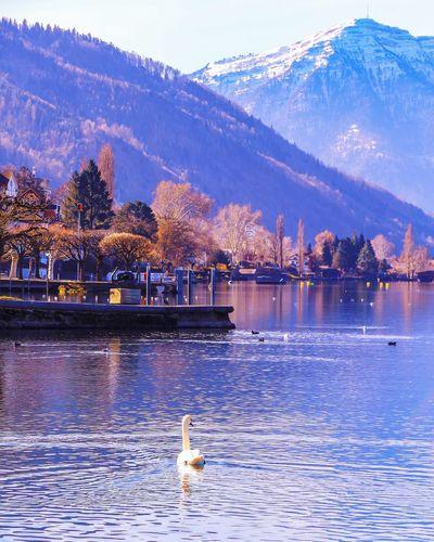 Lake Zug Water