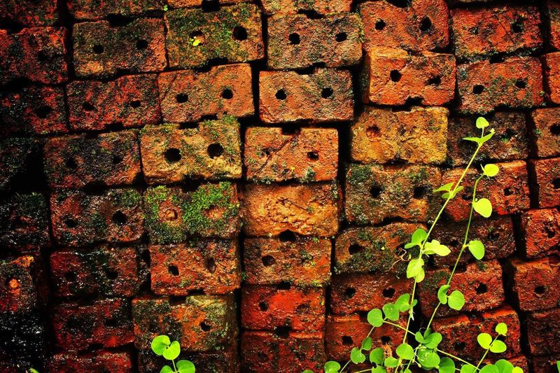 Brick background Full Frame Brick Wall Backgrounds Day No People Textured  Outdoors Leaf Close-up Nature wall