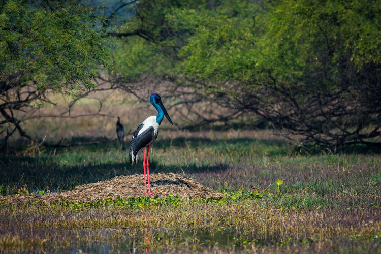 View of stork standing against forest
