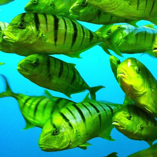 Fish Aquarium Nature Florida Blue Green Seaworld Smartphonephotography P7taylor Epicearthco