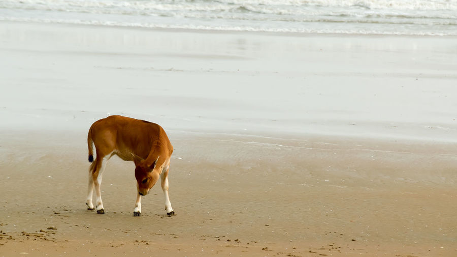 Horse standing on beach