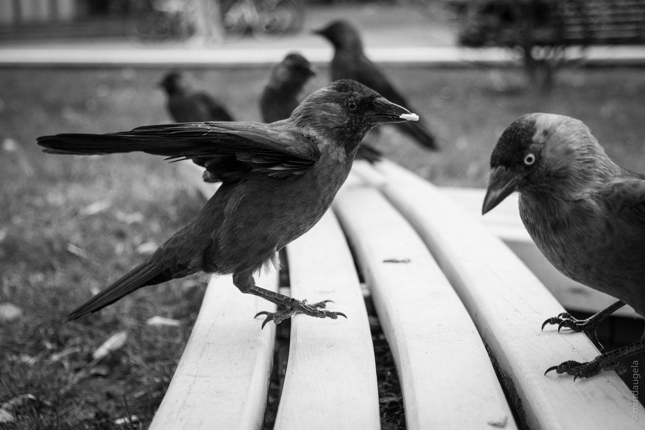 CLOSE-UP OF BIRD ON RAILING