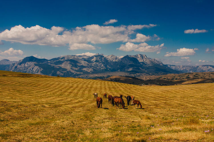 Horses Beauty In Nature Cloud Cloud - Sky Domestic Animals EyeEm Best Shots EyeEm Gallery EyeEm Nature Lover Grass Horse Horses Landscape Mountain Mountain Range Outdoors Sky