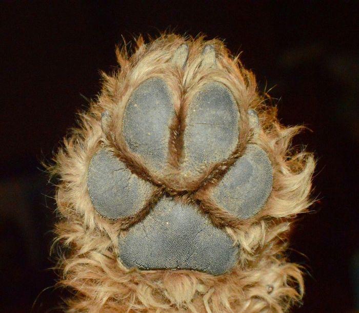 Poot Hondenpoot Airedaleterrier High Five! Dogfeet