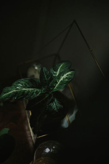 Close-Up Of Plant Against Dark Background