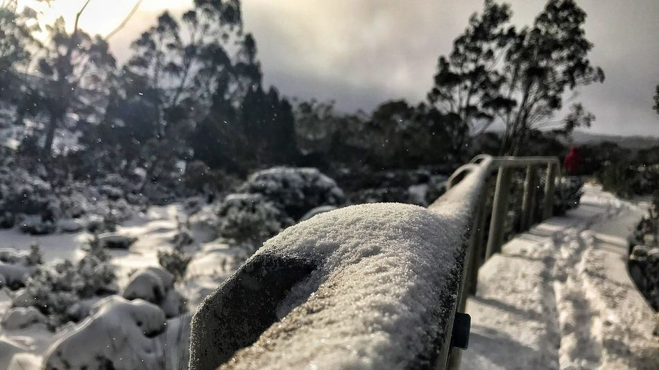 Outdoors Focus On Foreground Day Snow Nature No People Winter Close-up Sky Cold Temperature Tree Water Mount Field National Park Tasmania