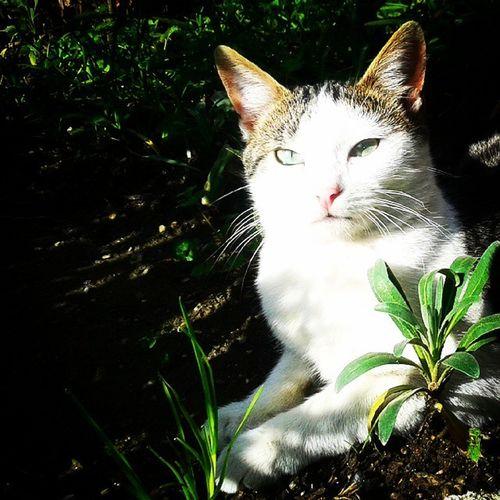 Pisicik Kedicik Miyaw Cat ınstacat