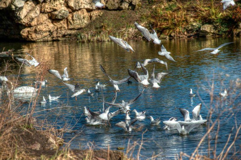 Highspeed photography 1/320-1/1000 sec shutter speed Birds Bird Cusworth Hall Highspeedshutter