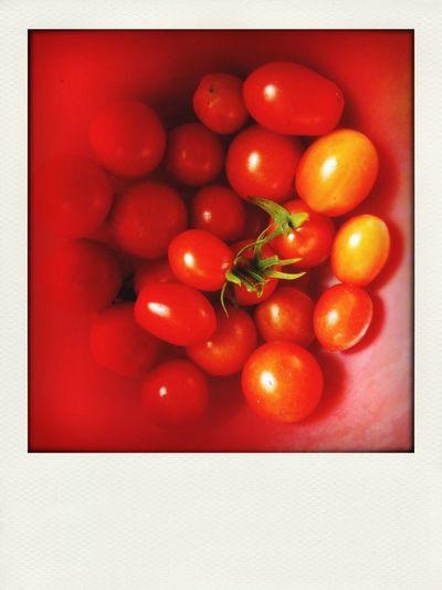 Dacha Everyone Loves Tomatoes