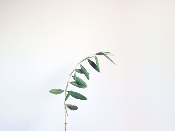 Pastel Power 🌿 Olive Leaf Leaves Green Peaceful Minimal Minimalism Love Life Hope Tree One Daylight Nature Europe Peace Peace And Quiet Interior Views Urban Spring Fever Nature's Diversities Holding Minimalist Close-up Fine Art Photography
