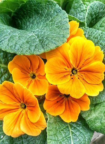 Flowers_collection EyeEm Best Shots - Nature Didsbury Eyeem Flower Lover EyeEm Nature Lover Flowers Orange Flower Fletcher Moss