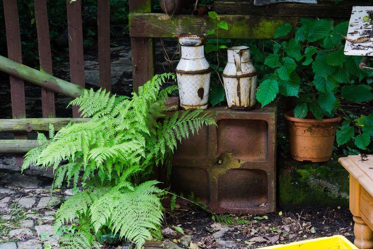 Plants growing in yard
