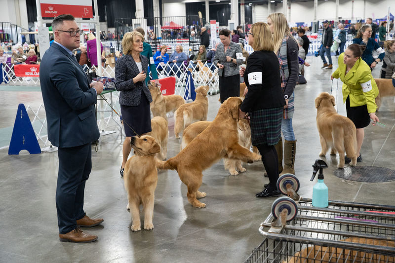 People standing with dogs in background