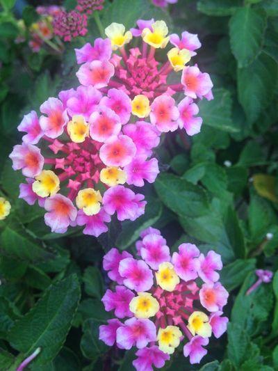 Flowers,Plants